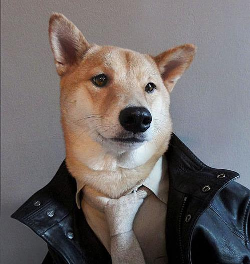 Who's that handsome hound?!? Are you dying? I'm totally dying. Image via Menswear Dog.